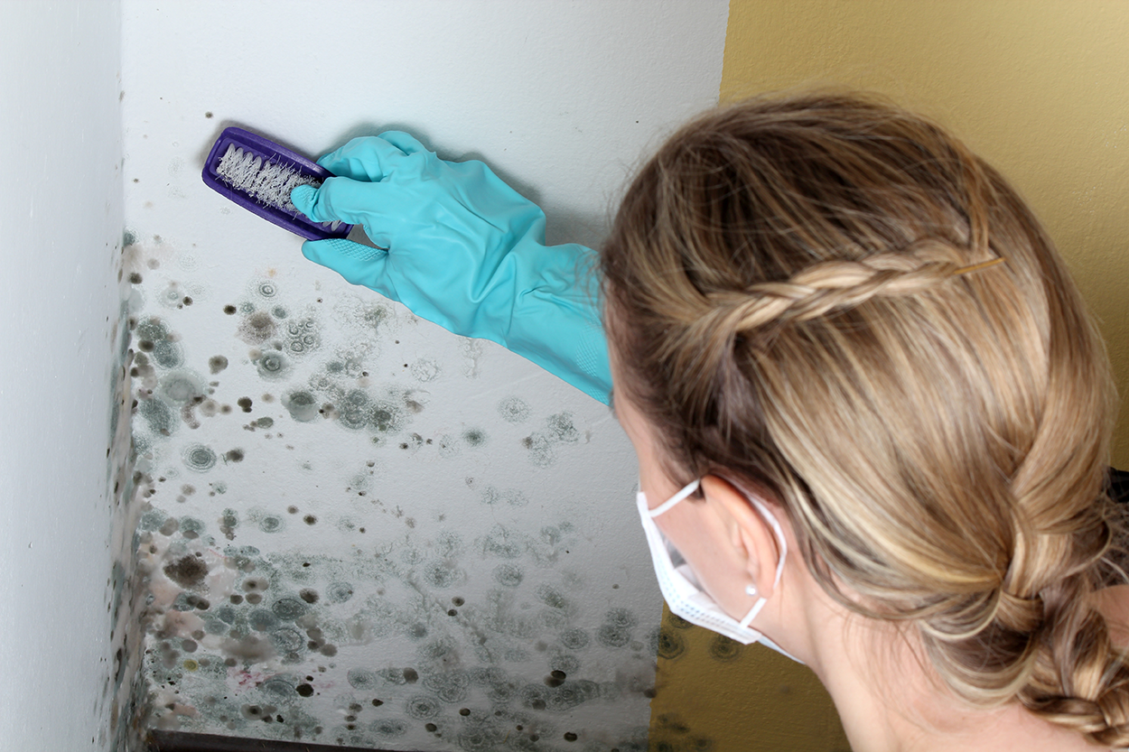 Mold Cleanup Utah Home